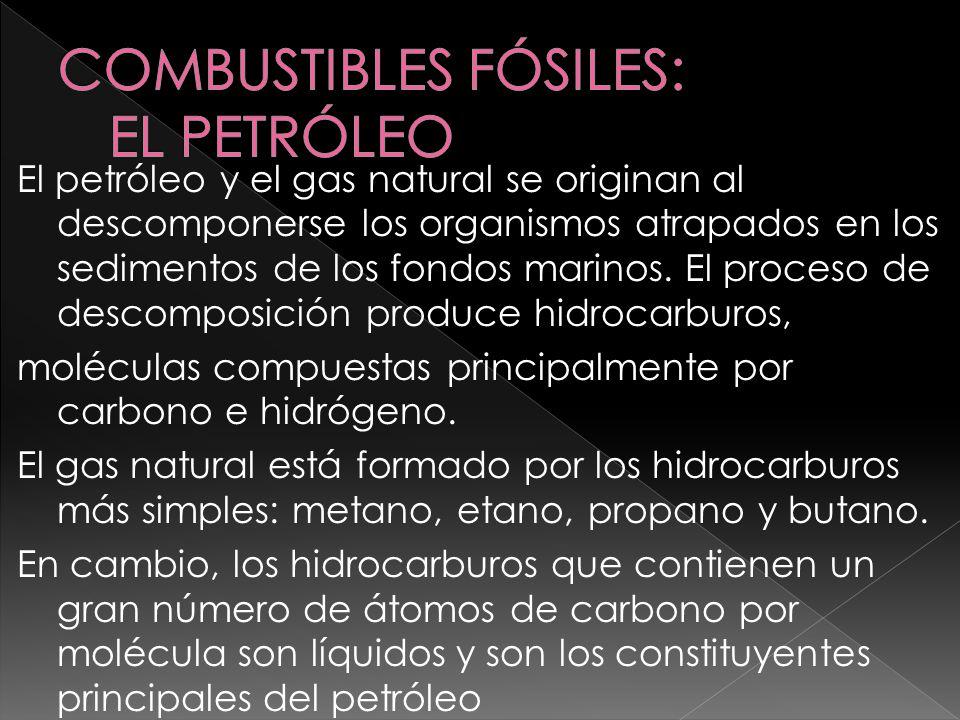 El petróleo y el gas natural se originan al descomponerse los organismos atrapados en los sedimentos de los fondos marinos. El proceso de descomposici