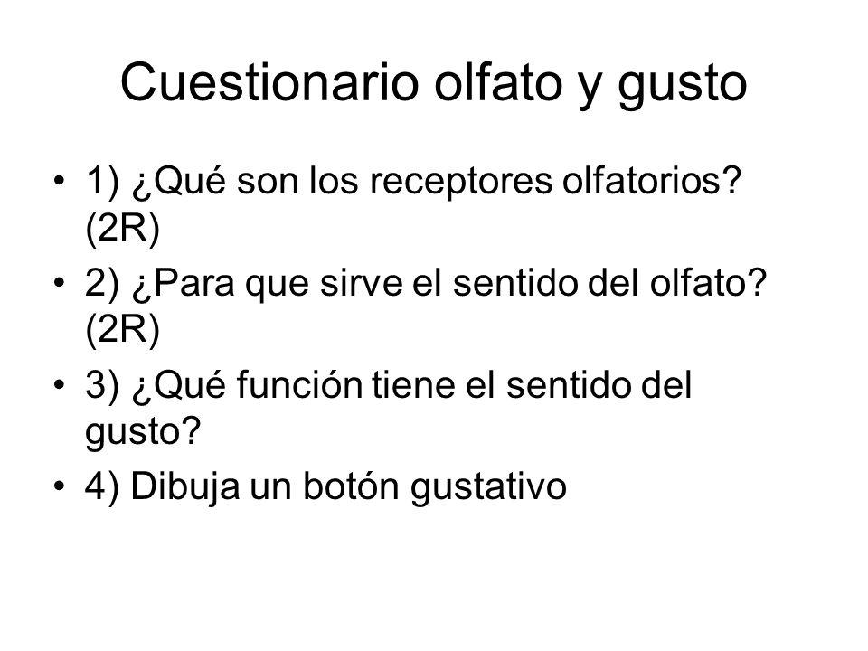 Cuestionario olfato y gusto 1) ¿Qué son los receptores olfatorios? (2R) 2) ¿Para que sirve el sentido del olfato? (2R) 3) ¿Qué función tiene el sentid