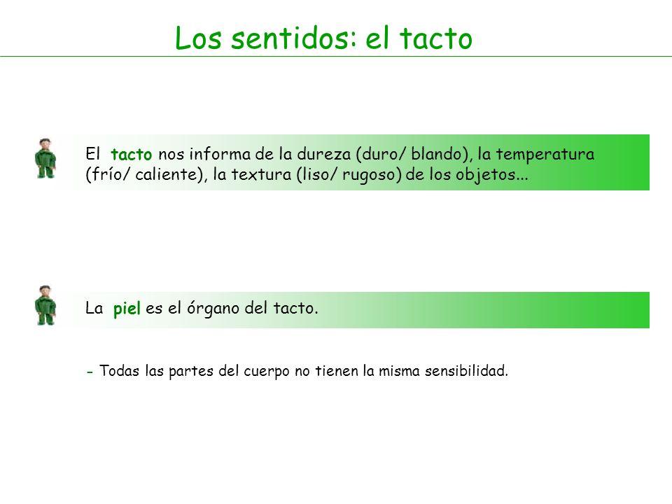 Los sentidos: el tacto El tacto nos informa de la dureza (duro/ blando), la temperatura (frío/ caliente), la textura (liso/ rugoso) de los objetos...
