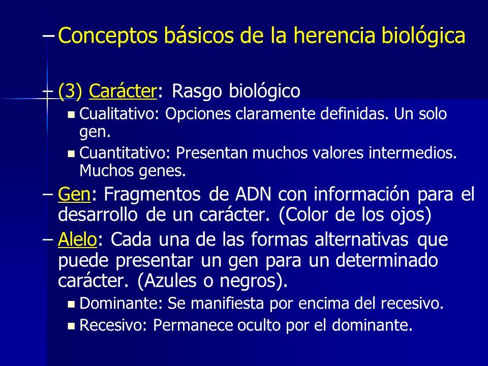 – –Conceptos básicos de la herencia biológica – –(3) Carácter: Rasgo biológico Cualitativo: Opciones claramente definidas. Un solo gen. Cuantitativo:
