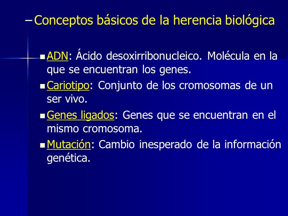 – –Conceptos básicos de la herencia biológica ADN: Ácido desoxirribonucleico. Molécula en la que se encuentran los genes. Cariotipo: Conjunto de los c