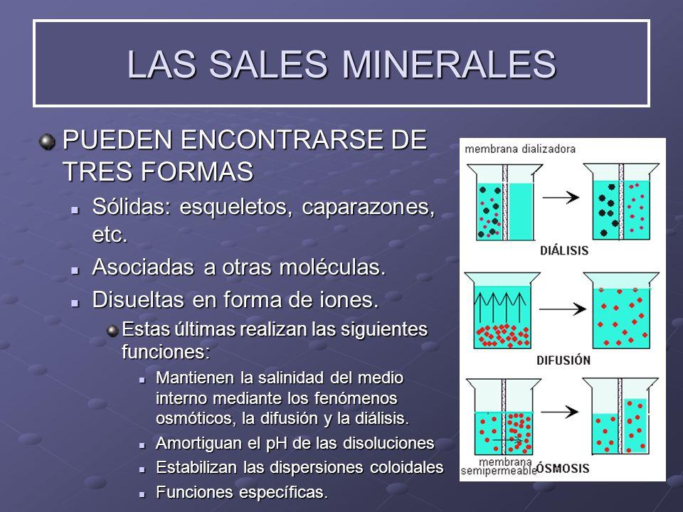 LAS SALES MINERALES PUEDEN ENCONTRARSE DE TRES FORMAS Sólidas: Sólidas: esqueletos, caparazones, etc. Asociadas Asociadas a otras moléculas. Disueltas