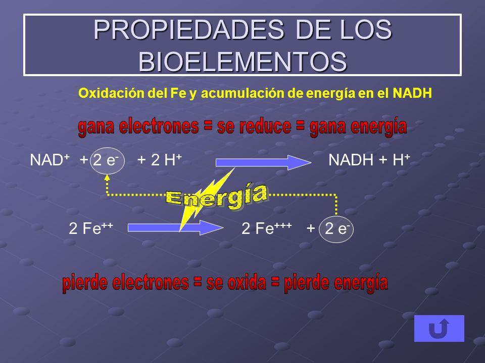 2 Fe ++ 2 Fe +++ + 2 e - NAD + + 2 e - + 2 H + NADH + H + PROPIEDADES DE LOS BIOELEMENTOS Oxidación del Fe y acumulación de energía en el NADH