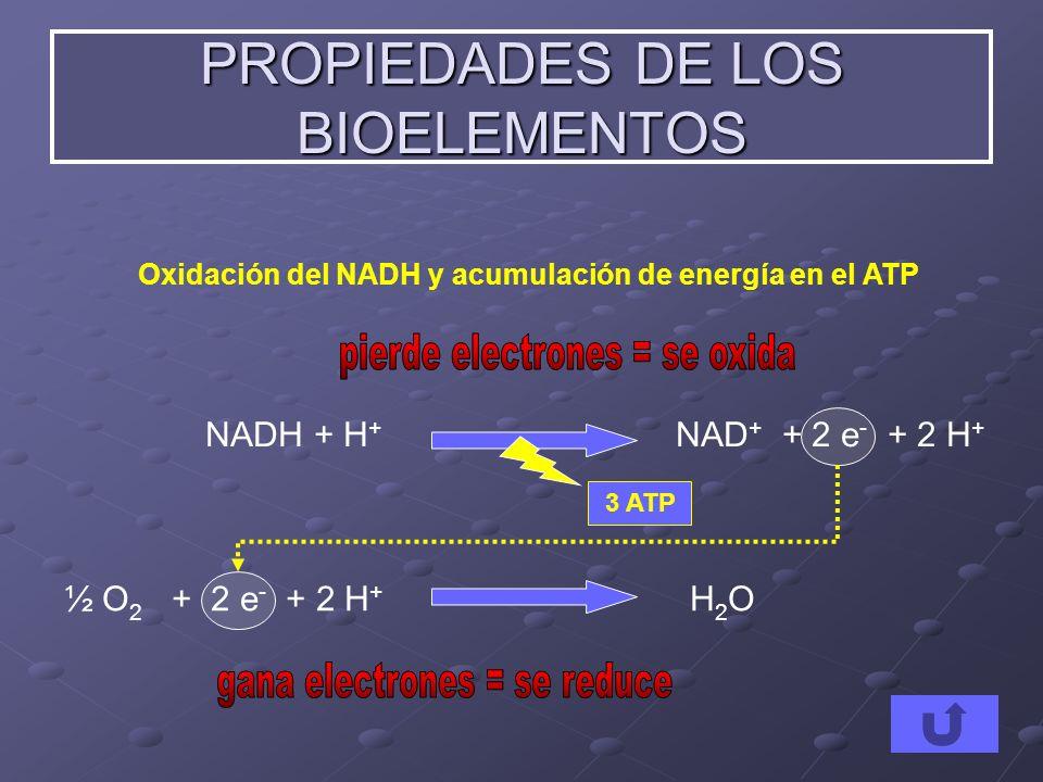 PROPIEDADES DE LOS BIOELEMENTOS NADH + H + NAD + + 2 e - + 2 H + ½ O 2 + 2 e - + 2 H + H 2 O Oxidación del NADH y acumulación de energía en el ATP 3 A