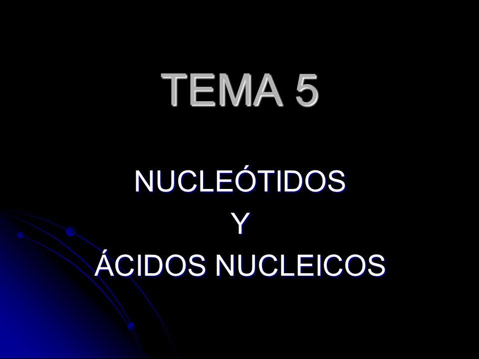 TEMA 5 NUCLEÓTIDOSY ÁCIDOS NUCLEICOS