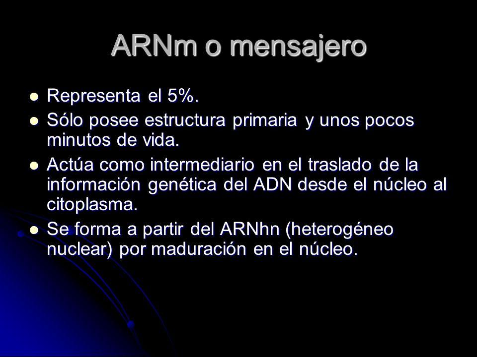 ARNm o mensajero Representa el 5%. Representa el 5%. Sólo posee estructura primaria y unos pocos minutos de vida. Sólo posee estructura primaria y uno