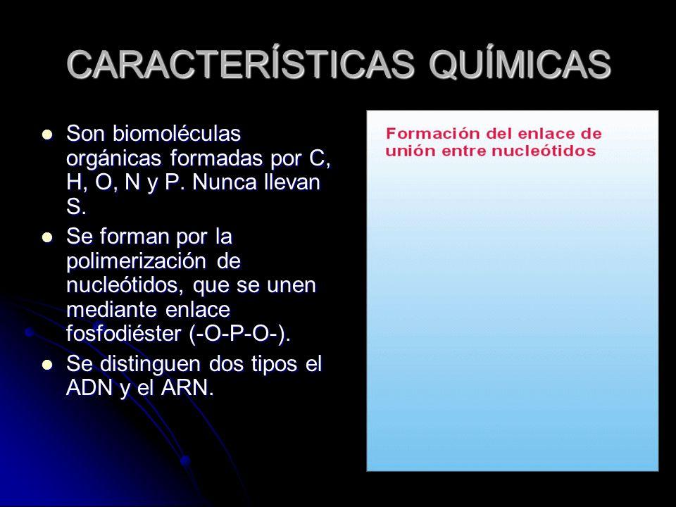 CARACTERÍSTICAS QUÍMICAS Son biomoléculas orgánicas formadas por C, H, O, N y P. Nunca llevan S. Son biomoléculas orgánicas formadas por C, H, O, N y