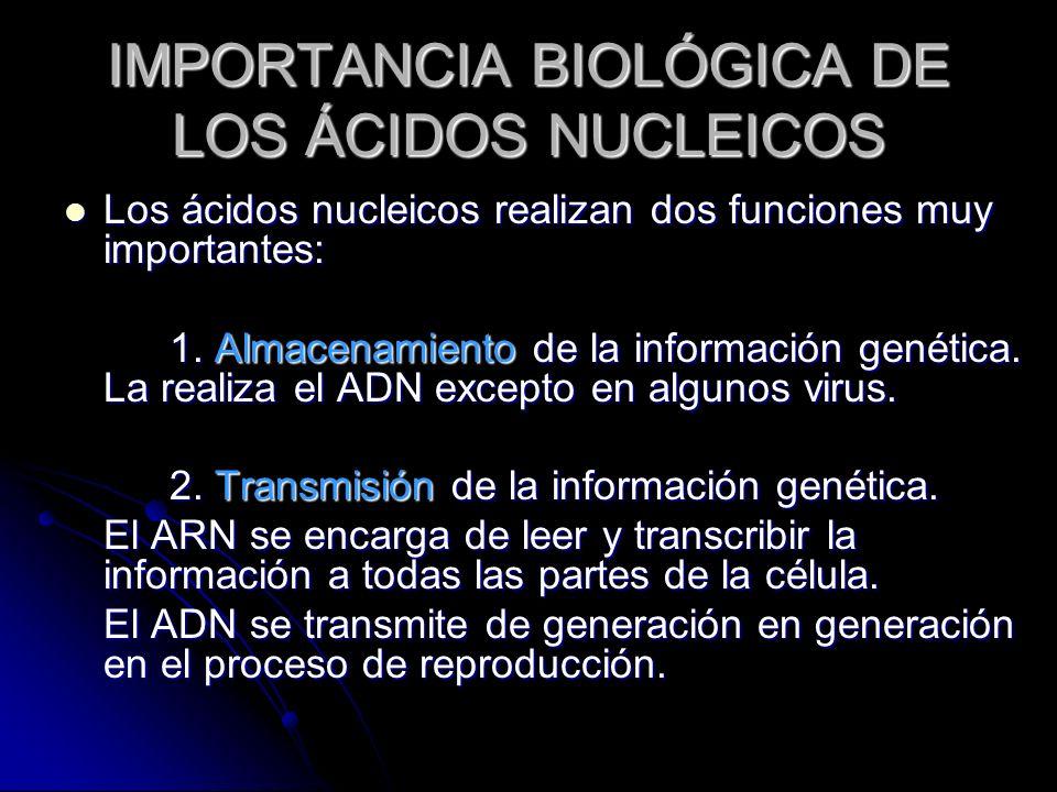 IMPORTANCIA BIOLÓGICA DE LOS ÁCIDOS NUCLEICOS Los ácidos nucleicos realizan dos funciones muy importantes: Los ácidos nucleicos realizan dos funciones