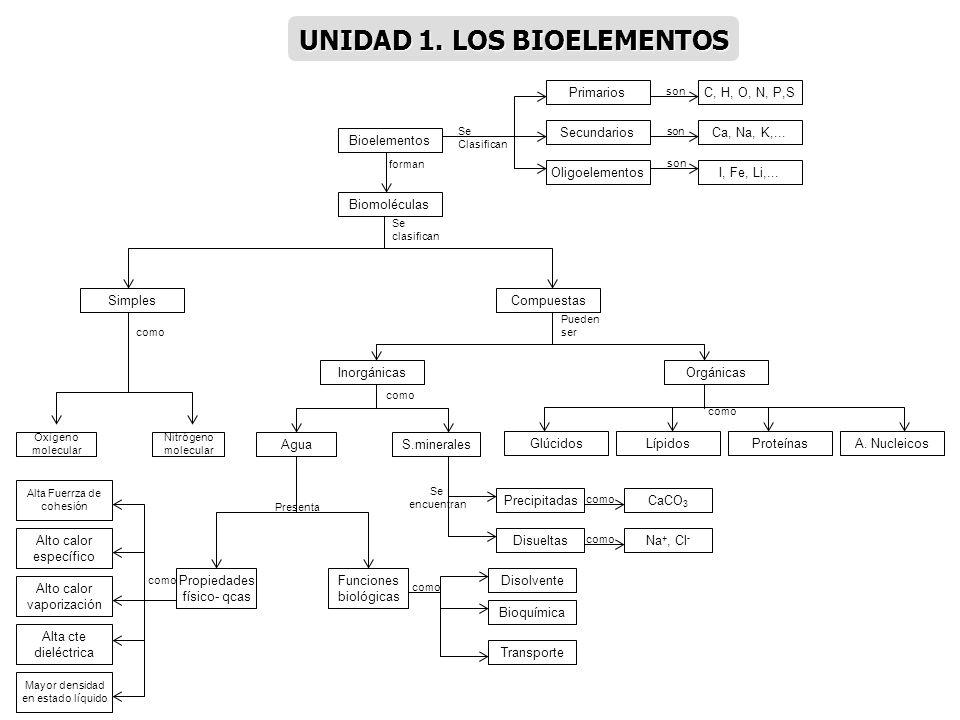 Bioelementos I, Fe, Li,... Ca, Na, K,... C, H, O, N, P,S Oligoelementos Secundarios Primarios Se Clasifican son Biomoléculas forman SimplesCompuestas