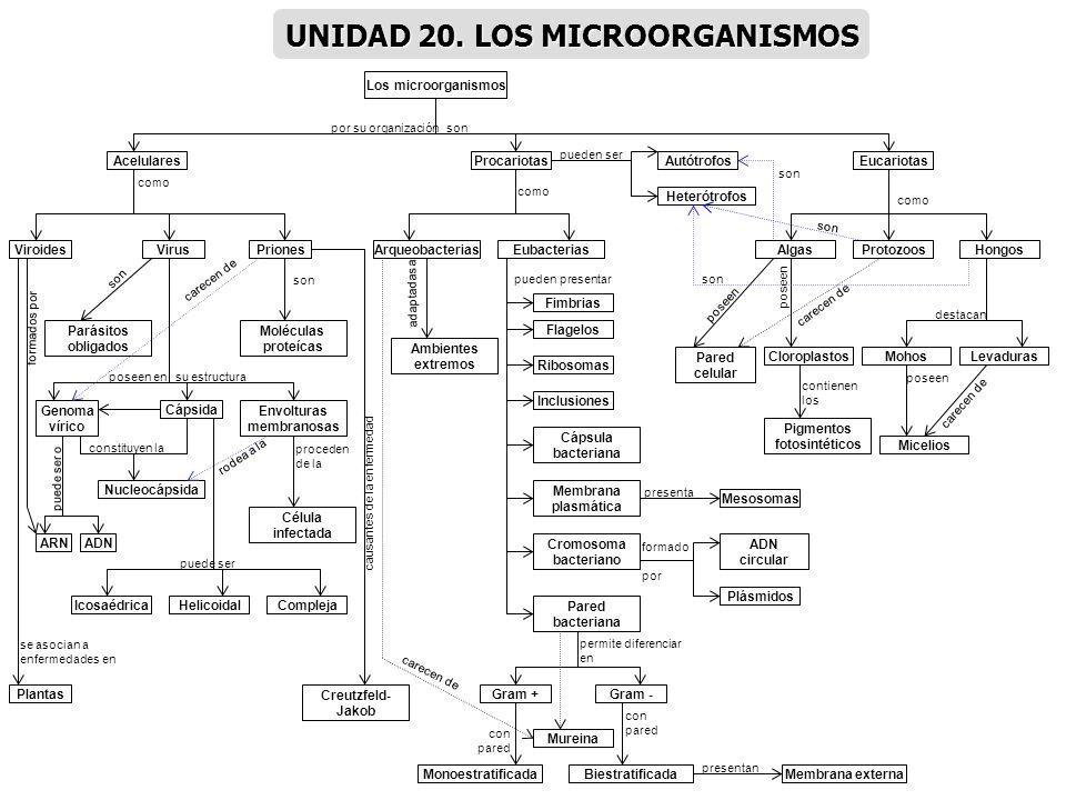 Los microorganismos Acelulares ViroidesVirusPriones Genoma vírico Cápsida Envolturas membranosas Nucleocápsida ADNARN IcosaédricaHelicoidalCompleja Cé