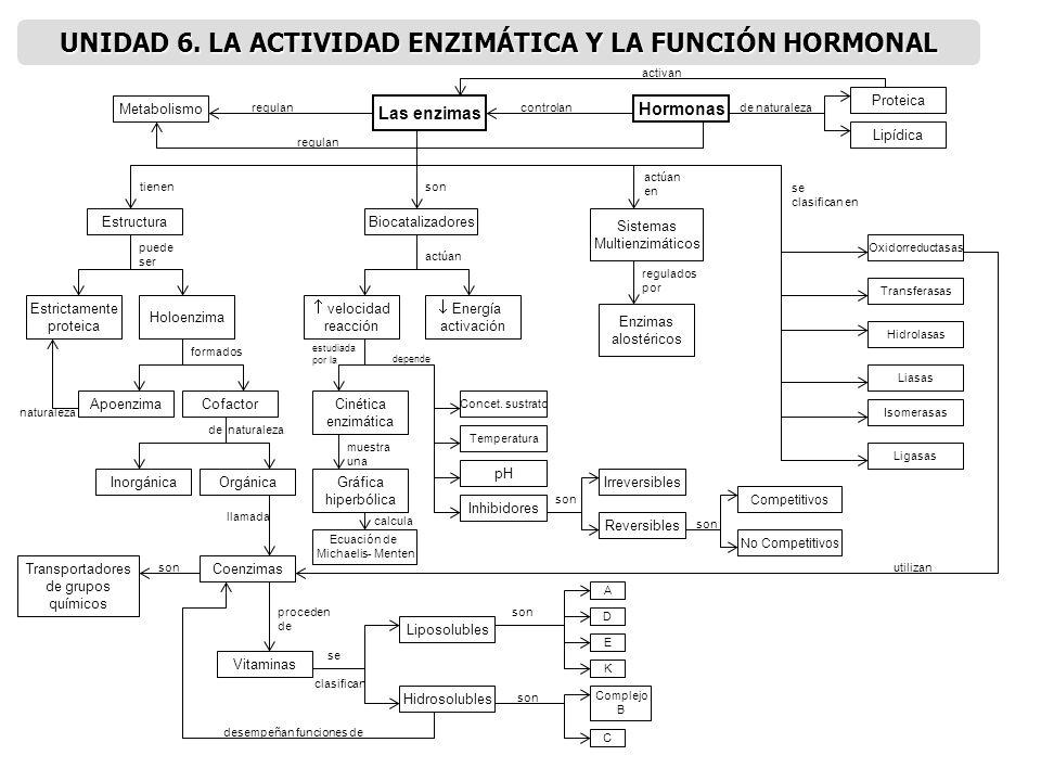Las enzimas Metabolismo Hormonas Proteica Lipídica EstructuraBiocatalizadores Sistemas Multienzimáticos Enzimas alostéricos Energía activación velocid