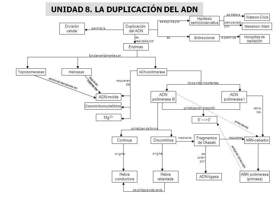UNIDAD 8. LA DUPLICACIÓN DEL ADN Enzimas Duplicación del ADN División celular Hipótesis semiconservativa Watson-Crick Meselson -Stahl Bidireccional Ho