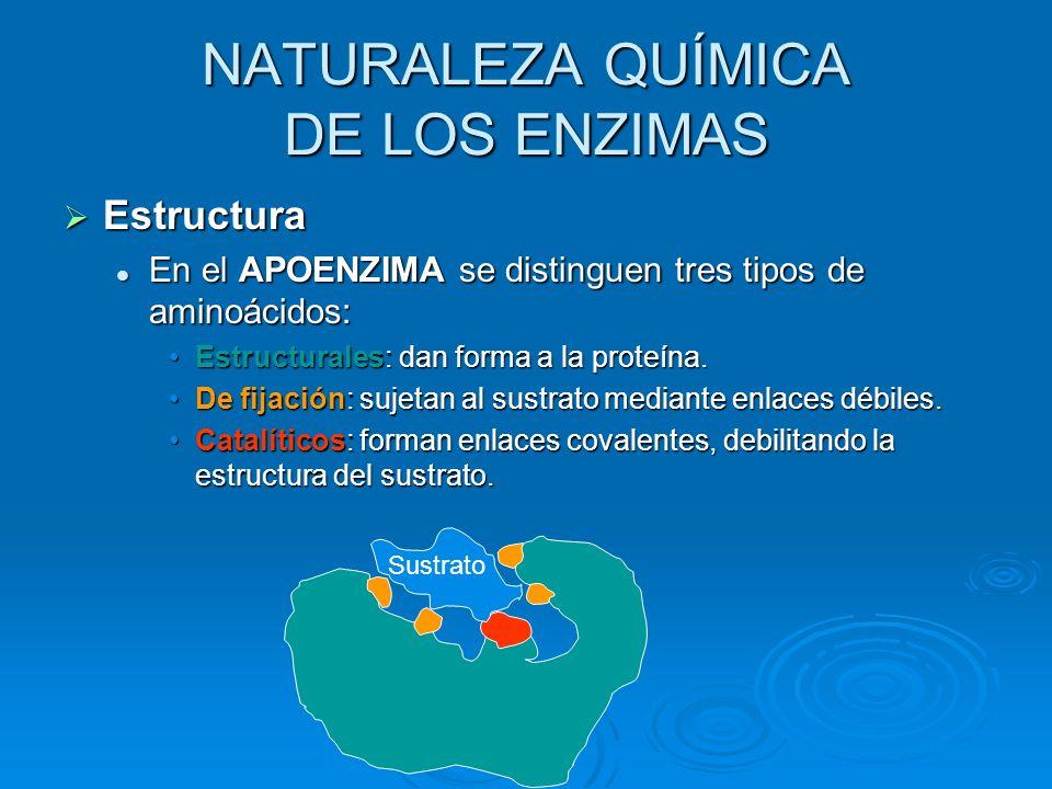 Estructura En el APOENZIMA se distinguen tres tipos de aminoácidos: Estructurales: dan forma a la proteína. De fijación: sujetan al sustrato mediante