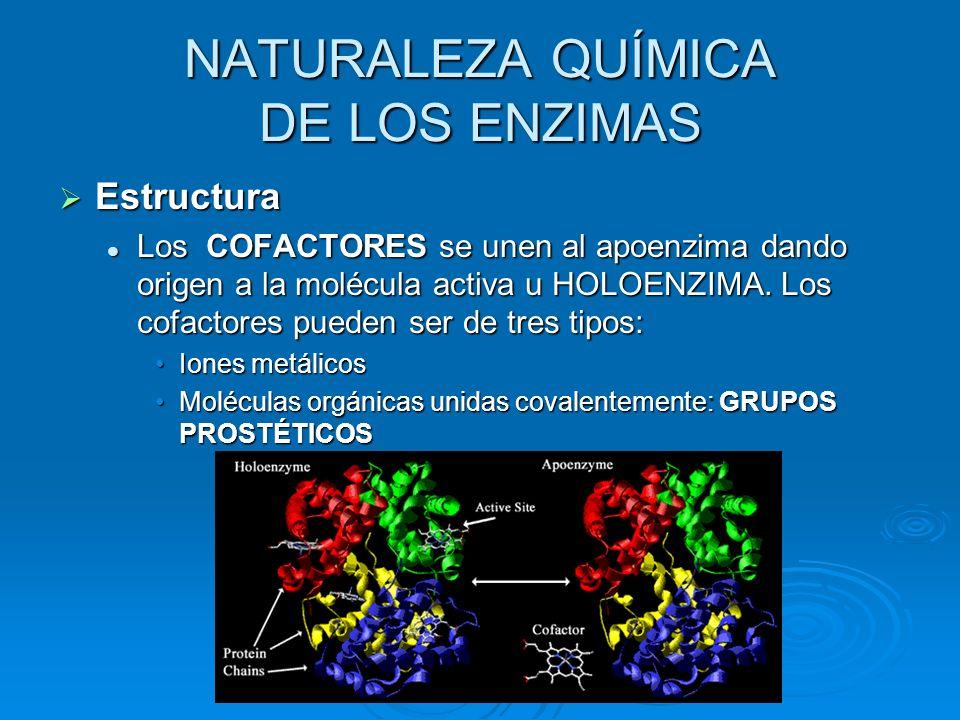 Estructura Los COFACTORES se unen al apoenzima dando origen a la molécula activa u HOLOENZIMA. Los cofactores pueden ser de tres tipos: Iones metálico