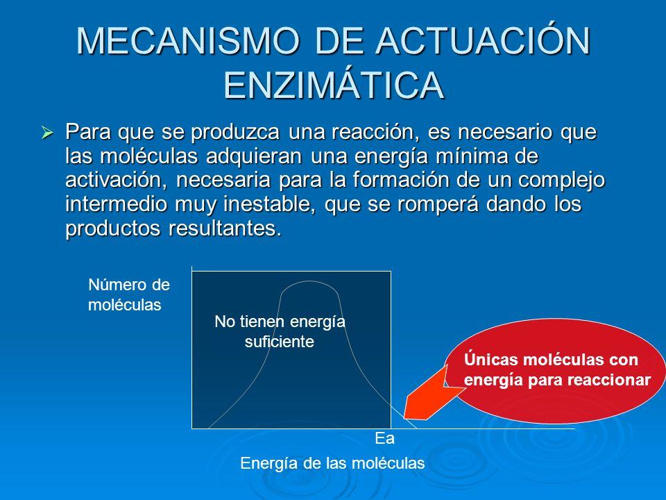 MECANISMO DE ACTUACIÓN ENZIMÁTICA Para que se produzca una reacción, es necesario que las moléculas adquieran una energía mínima de activación, necesa