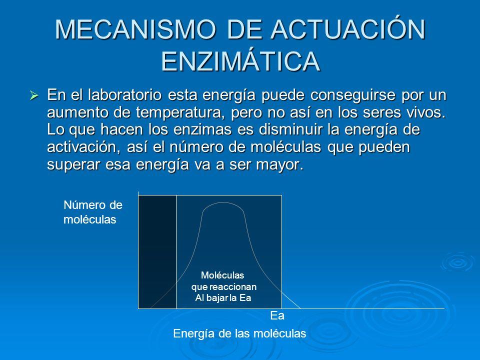 MECANISMO DE ACTUACIÓN ENZIMÁTICA En el laboratorio esta energía puede conseguirse por un aumento de temperatura, pero no así en los seres vivos. Lo q