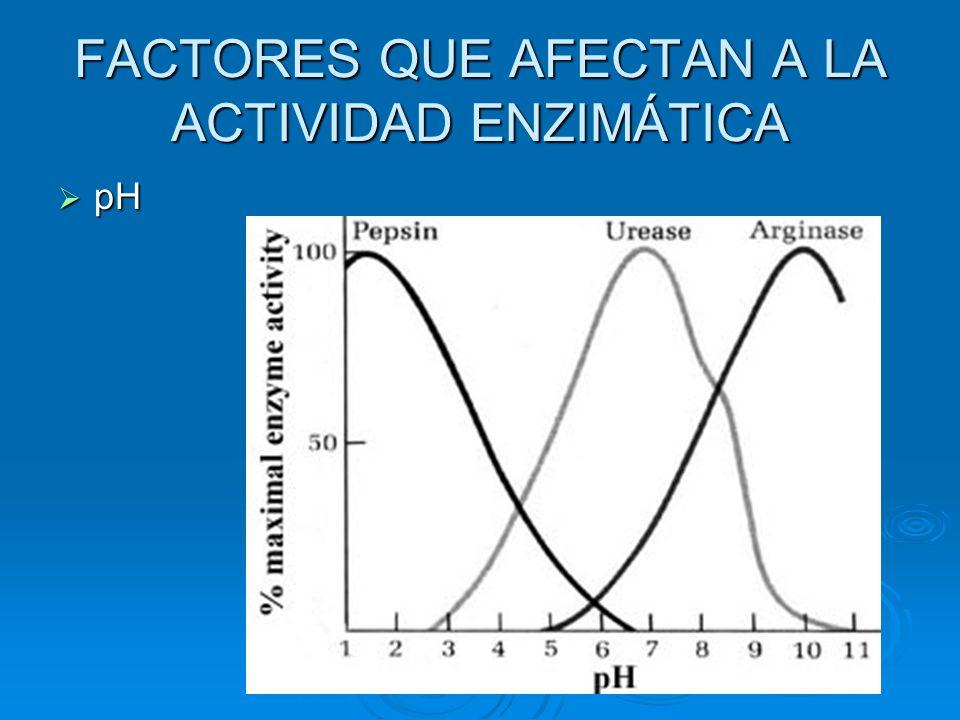 FACTORES QUE AFECTAN A LA ACTIVIDAD ENZIMÁTICA pH pH