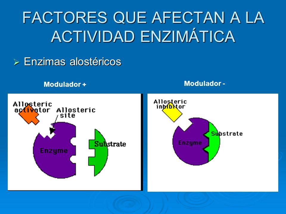 Enzimas alostéricos Enzimas alostéricos Modulador + Modulador -