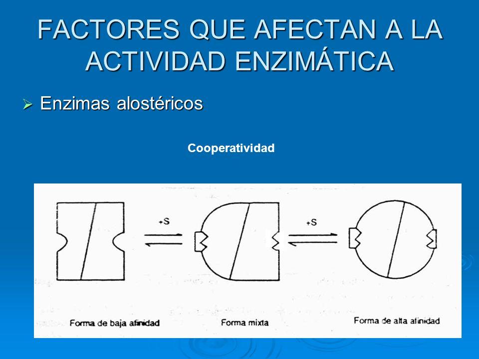 FACTORES QUE AFECTAN A LA ACTIVIDAD ENZIMÁTICA Enzimas alostéricos Enzimas alostéricos Cooperatividad