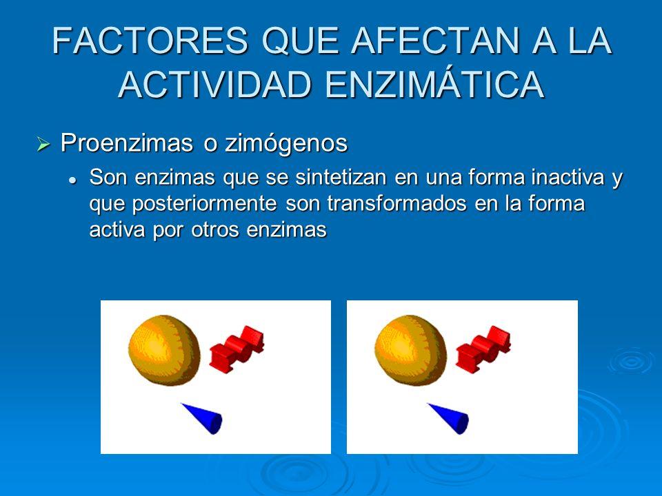 FACTORES QUE AFECTAN A LA ACTIVIDAD ENZIMÁTICA Proenzimas o zimógenos Son enzimas que se sintetizan en una forma inactiva y que posteriormente son tra