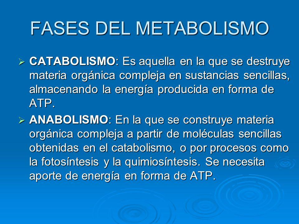 FASES DEL METABOLISMO CATABOLISMO: Es aquella en la que se destruye materia orgánica compleja en sustancias sencillas, almacenando la energía producid
