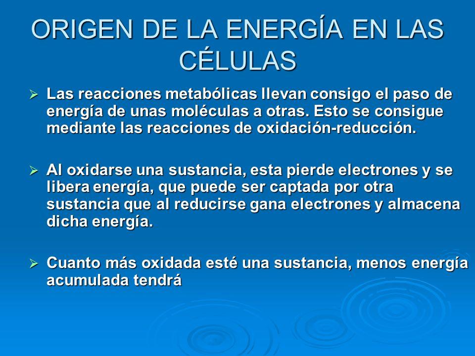 ORIGEN DE LA ENERGÍA EN LAS CÉLULAS Las reacciones metabólicas llevan consigo el paso de energía de unas moléculas a otras. Esto se consigue mediante