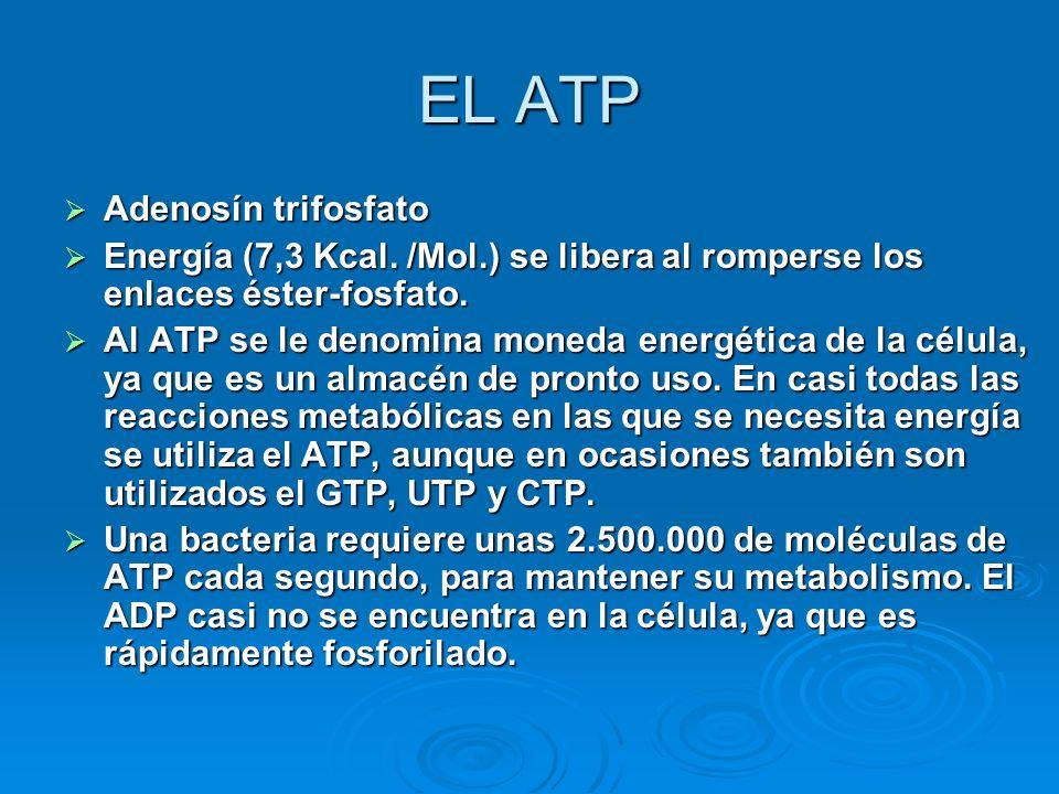 EL ATP Adenosín trifosfato Energía (7,3 Kcal. /Mol.) se libera al romperse los enlaces éster-fosfato. Al ATP se le denomina moneda energética de la cé
