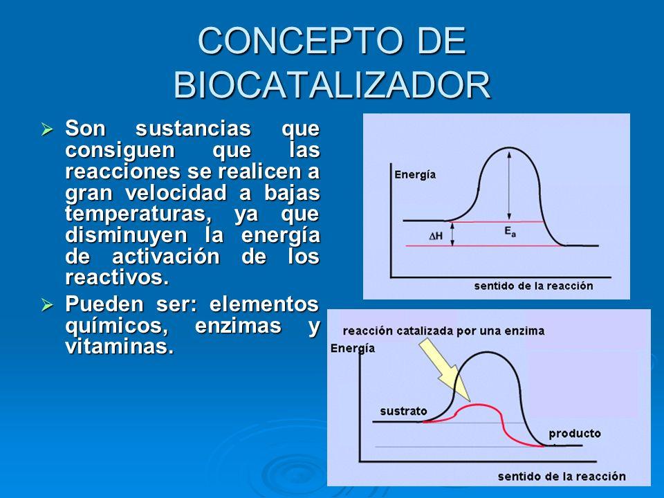 CONCEPTO DE BIOCATALIZADOR Son sustancias que consiguen que las reacciones se realicen a gran velocidad a bajas temperaturas, ya que disminuyen la ene