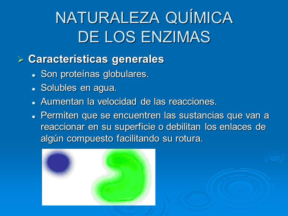 NATURALEZA QUÍMICA DE LOS ENZIMAS Características generales Son proteínas globulares. Solubles en agua. Aumentan la velocidad de las reacciones. Permi