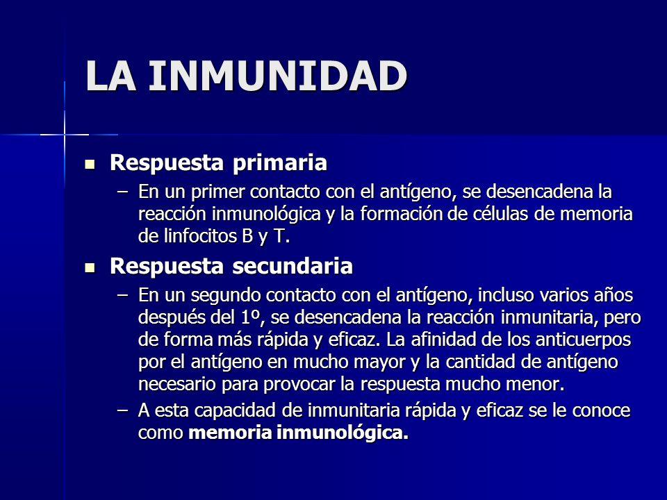 LA INMUNIDAD Respuesta primaria Respuesta primaria –En un primer contacto con el antígeno, se desencadena la reacción inmunológica y la formación de células de memoria de linfocitos B y T.