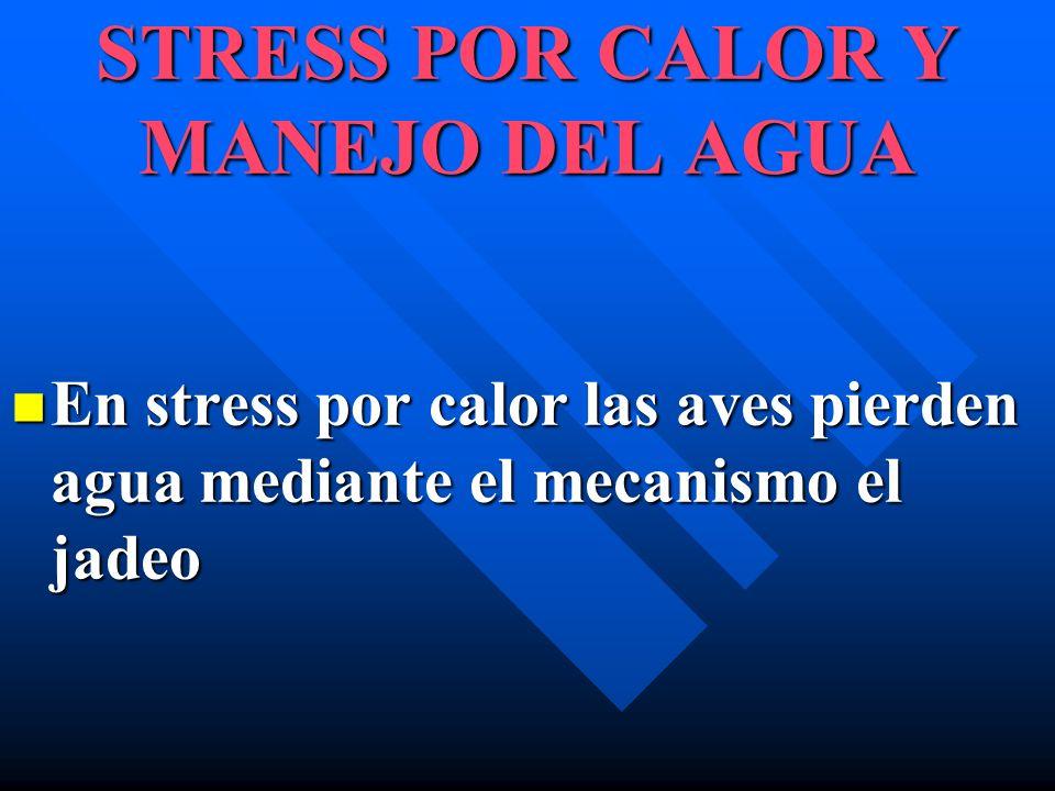 STRESS POR CALOR Y MANEJO DEL AGUA En stress por calor las aves pierden agua mediante el mecanismo el jadeo En stress por calor las aves pierden agua