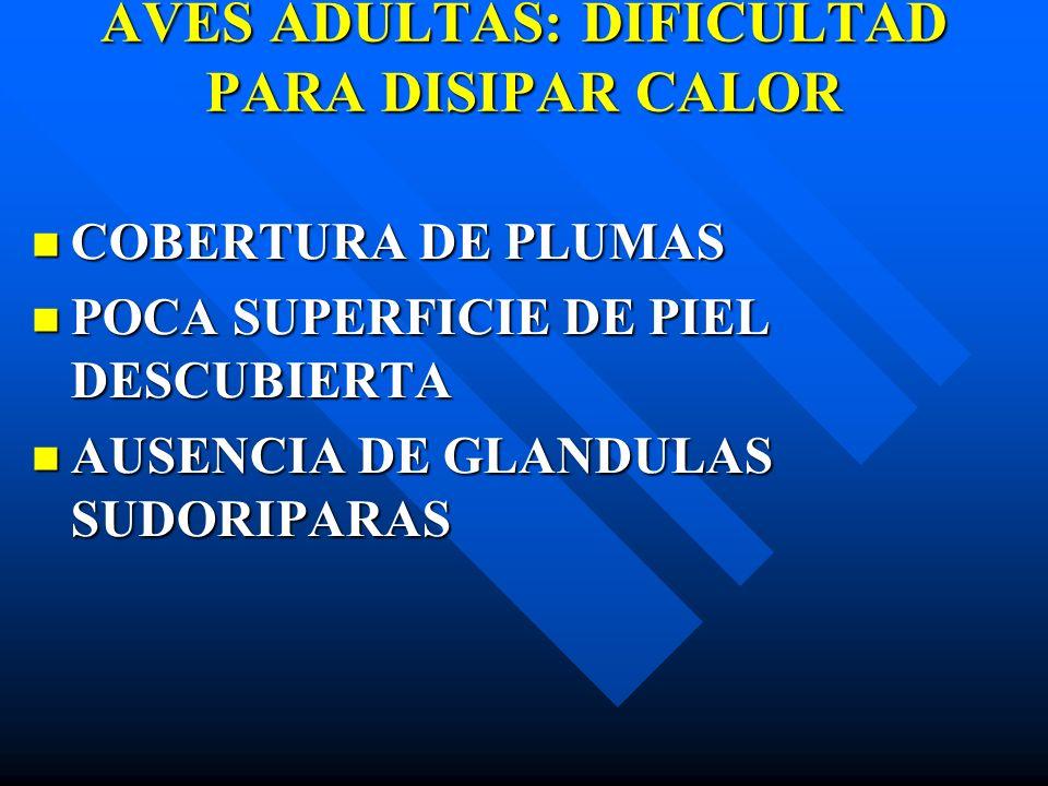 AVES ADULTAS: DIFICULTAD PARA DISIPAR CALOR COBERTURA DE PLUMAS COBERTURA DE PLUMAS POCA SUPERFICIE DE PIEL DESCUBIERTA POCA SUPERFICIE DE PIEL DESCUB