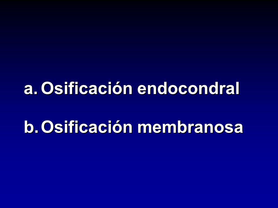 a.Osificación endocondral b.Osificación membranosa a.Osificación endocondral b.Osificación membranosa