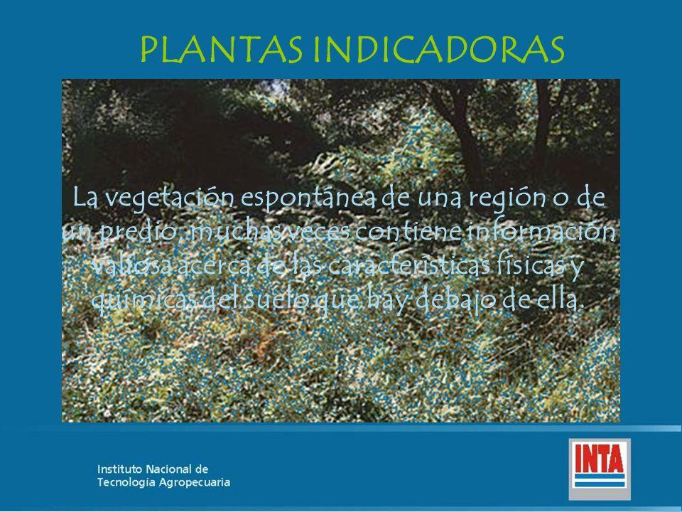 La vegetación espontánea de una región o de un predio, muchas veces contiene información valiosa acerca de las características físicas y químicas del suelo que hay debajo de ella.