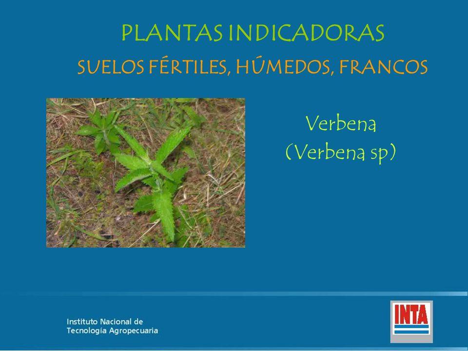 Verbena (Verbena sp) SUELOS FÉRTILES, HÚMEDOS, FRANCOS PLANTAS INDICADORAS