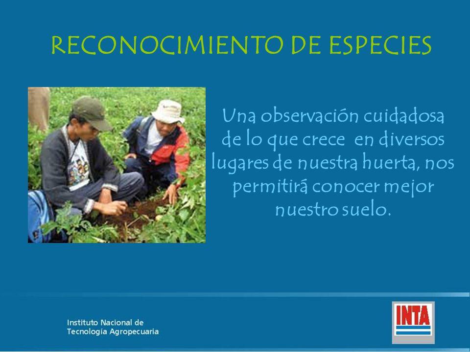 Una observación cuidadosa de lo que crece en diversos lugares de nuestra huerta, nos permitirá conocer mejor nuestro suelo.
