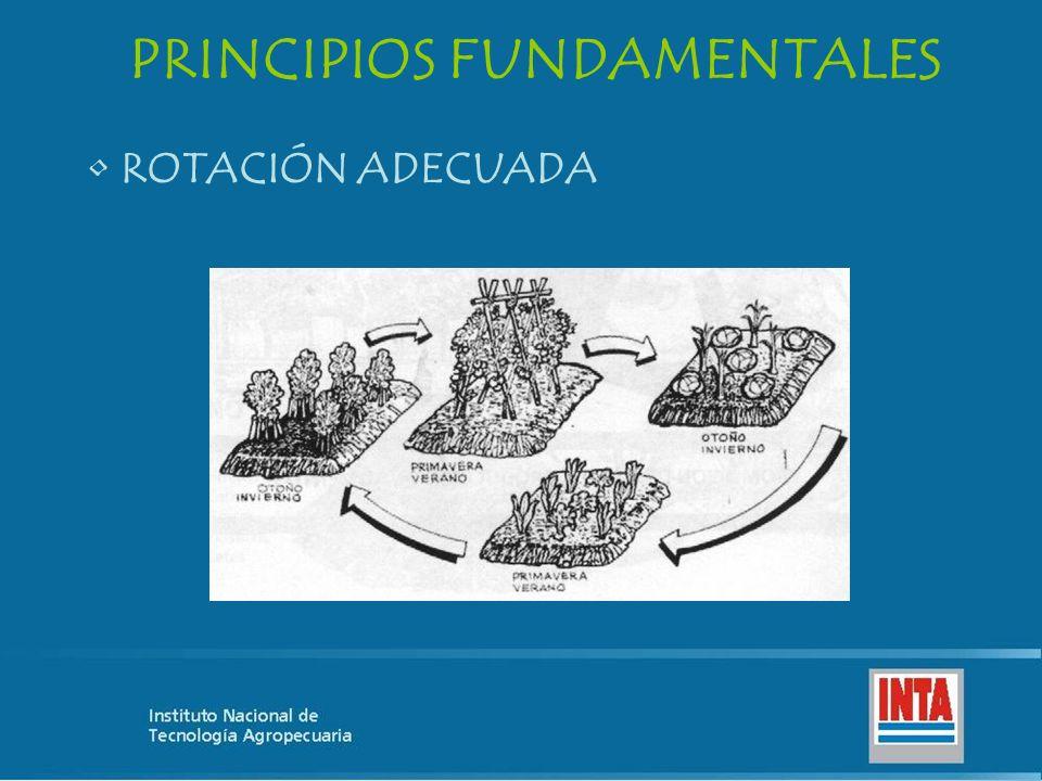 PRINCIPIOS FUNDAMENTALES ROTACIÓN ADECUADA