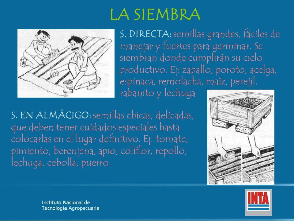 LA SIEMBRA S. DIRECTA: semillas grandes, fáciles de manejar y fuertes para germinar. Se siembran donde cumplirán su ciclo productivo. Ej: zapallo, por