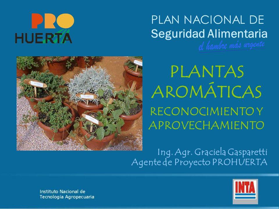 PLAN NACIONAL DE Seguridad Alimentaria PLANTAS AROMÁTICAS RECONOCIMIENTO Y APROVECHAMIENTO Ing. Agr. Graciela Gasparetti Agente de Proyecto PROHUERTA