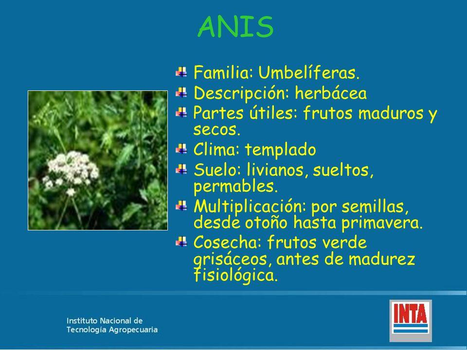 ANIS Familia: Umbelíferas. Descripción: herbácea Partes útiles: frutos maduros y secos. Clima: templado Suelo: livianos, sueltos, permables. Multiplic