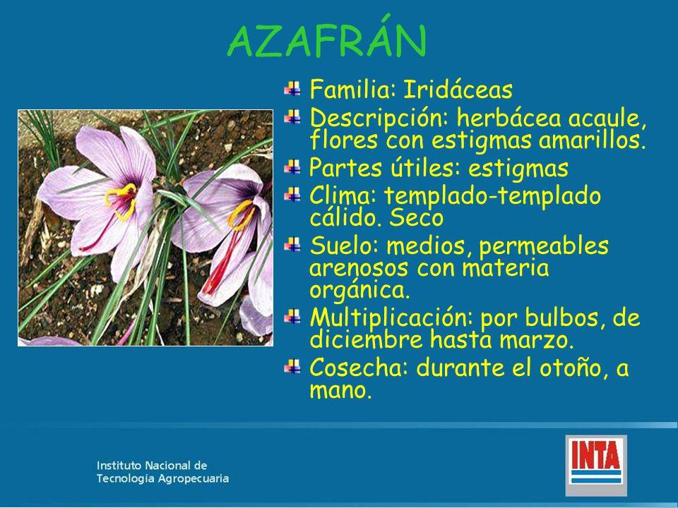 AZAFRÁN Familia: Iridáceas Descripción: herbácea acaule, flores con estigmas amarillos. Partes útiles: estigmas Clima: templado-templado cálido. Seco