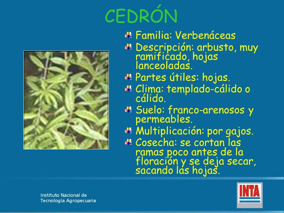 CEDRÓN Familia: Verbenáceas Descripción: arbusto, muy ramificado, hojas lanceoladas. Partes útiles: hojas. Clima: templado-cálido o cálido. Suelo: fra