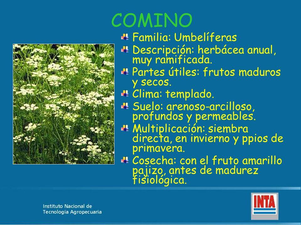 COMINO Familia: Umbelíferas Descripción: herbácea anual, muy ramificada. Partes útiles: frutos maduros y secos. Clima: templado. Suelo: arenoso-arcill