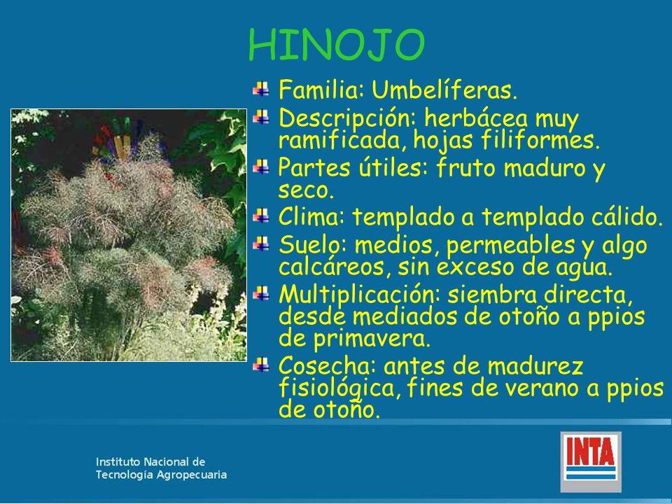 HINOJO Familia: Umbelíferas. Descripción: herbácea muy ramificada, hojas filiformes. Partes útiles: fruto maduro y seco. Clima: templado a templado cá