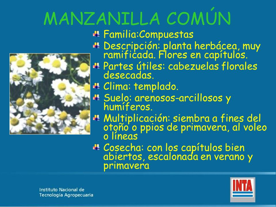 MANZANILLA COMÚN Familia:Compuestas Descripción: planta herbácea, muy ramificada. Flores en capítulos. Partes útiles: cabezuelas florales desecadas. C
