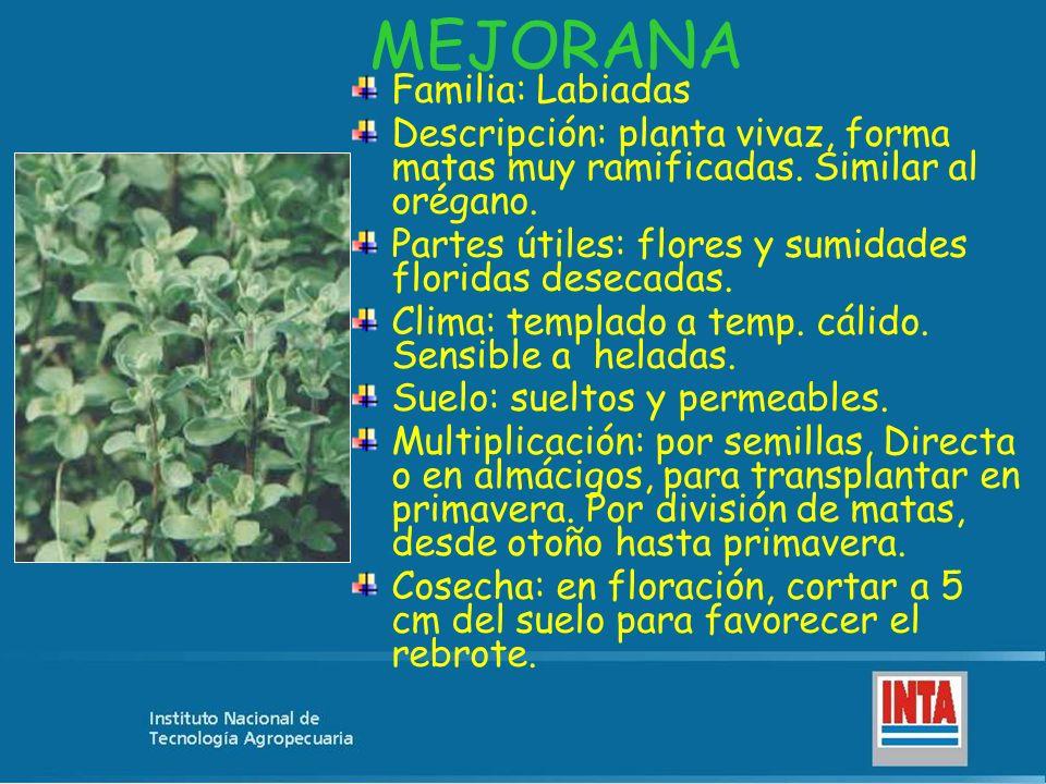 MEJORANA Familia: Labiadas Descripción: planta vivaz, forma matas muy ramificadas. Similar al orégano. Partes útiles: flores y sumidades floridas dese