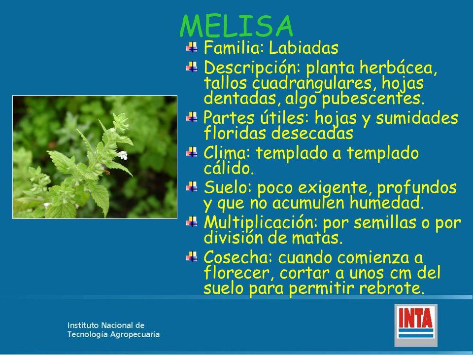 MELISA Familia: Labiadas Descripción: planta herbácea, tallos cuadrangulares, hojas dentadas, algo pubescentes. Partes útiles: hojas y sumidades flori