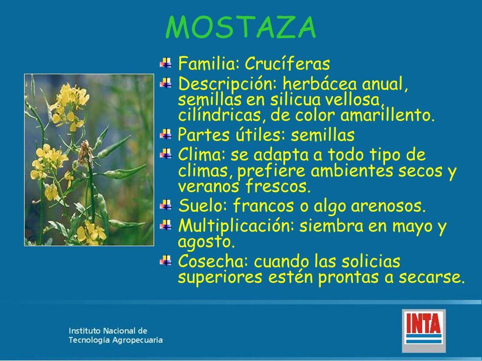 MOSTAZA Familia: Crucíferas Descripción: herbácea anual, semillas en silicua vellosa, cilíndricas, de color amarillento. Partes útiles: semillas Clima