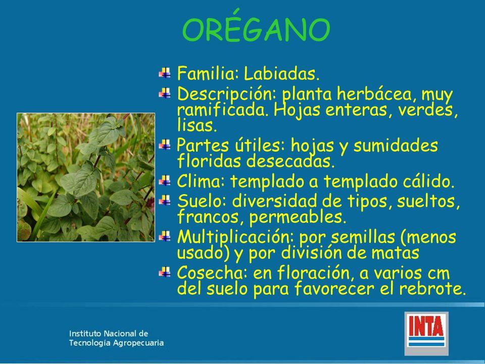 ORÉGANO Familia: Labiadas. Descripción: planta herbácea, muy ramificada. Hojas enteras, verdes, lisas. Partes útiles: hojas y sumidades floridas desec