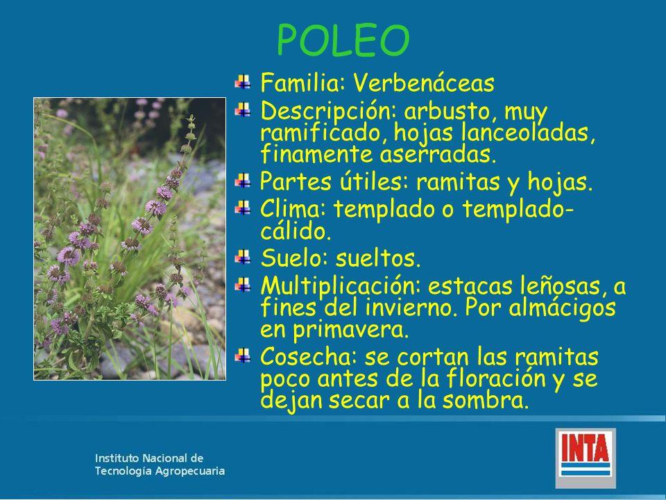 POLEO Familia: Verbenáceas Descripción: arbusto, muy ramificado, hojas lanceoladas, finamente aserradas. Partes útiles: ramitas y hojas. Clima: templa